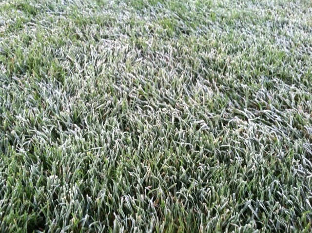 Protecting turf in the frost | Ivinghoe Turf News