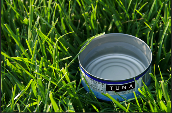 Tuna can method for determining water usage in watering