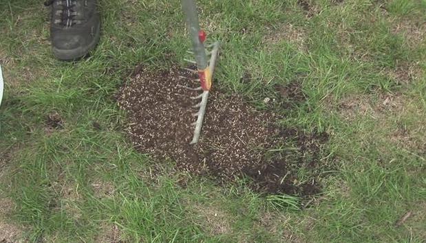 Repairing garden turf