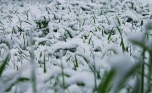 Snow on turf