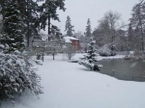 Wintery garden